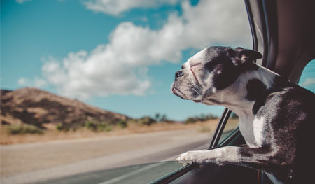 Travelling abroad and in the UK with your dog
