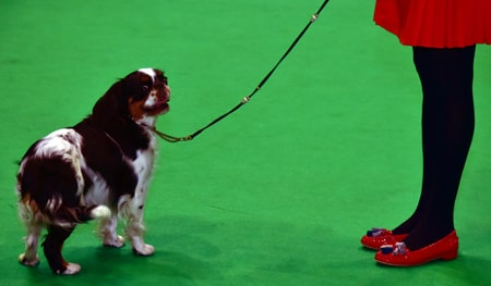 History of Crufts