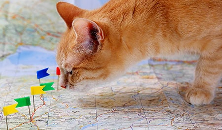 How will pet travel change after Brexit?