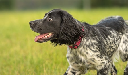 Best breeds for working dogs