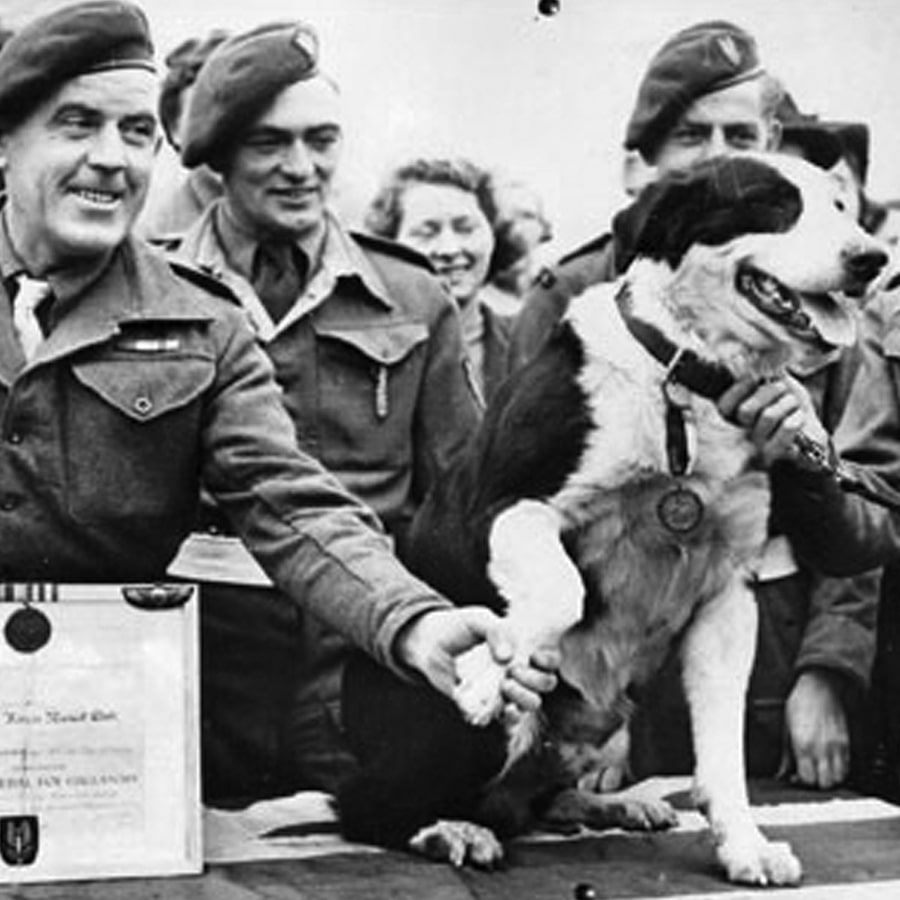 Rob the Collie who won a Dickin Medal