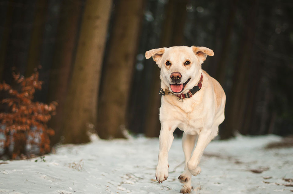 Walking your dog in winter. Tips and best accessories